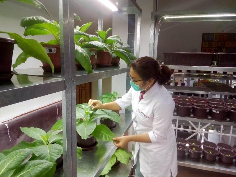 Ноу-хау: казахстанские ученые используют насекомых в борьбе с вредителями